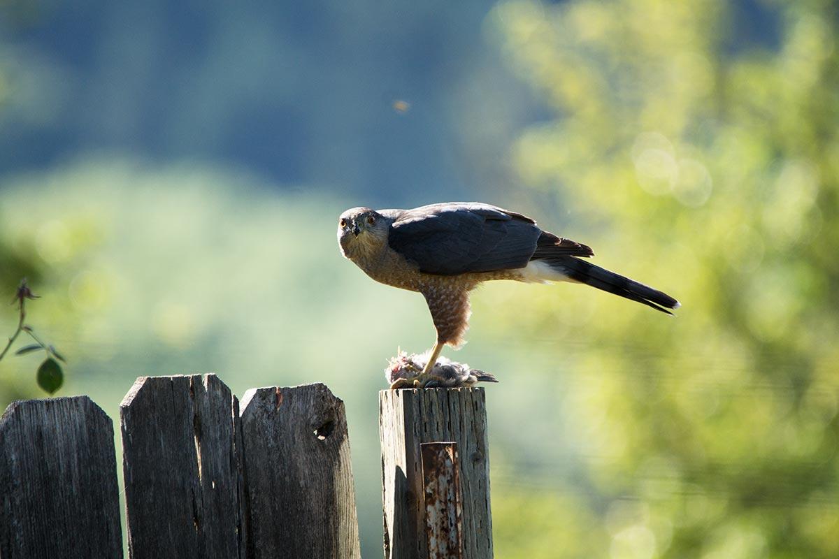 falcondinner