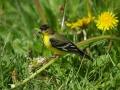 littlebirdeating