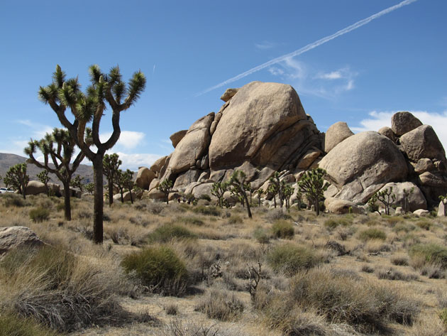Joshua Tree National Park Ken Lund